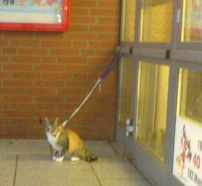 2008-07-10-Penny-Katze
