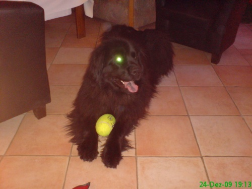 2009-12-24 (06)-BORG-Hund