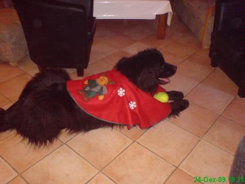 2009-12-24 (10)-Reit-Decke